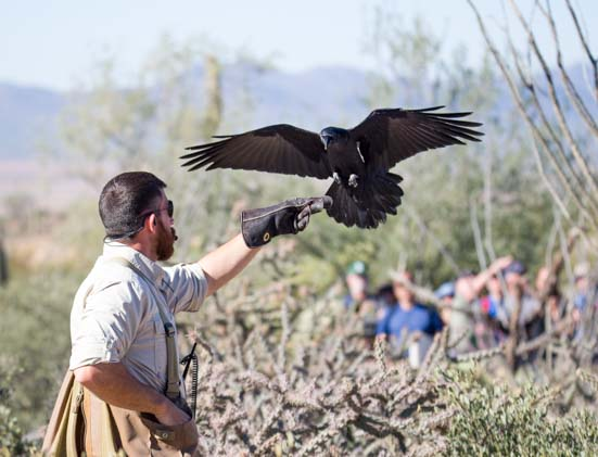 Free Flying Raptor Exhibit Arizona Sonoran Desert Museum