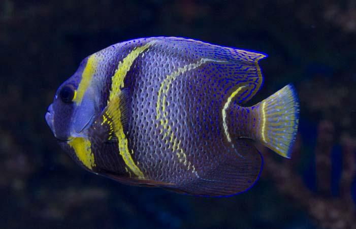 Fish Arizona Sonoran Desert Museum