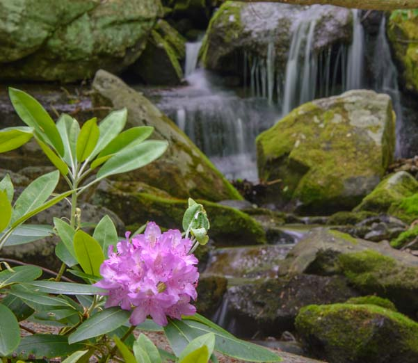 Rhododendron and waterfall in North Carolina Blue Ridge Parkway