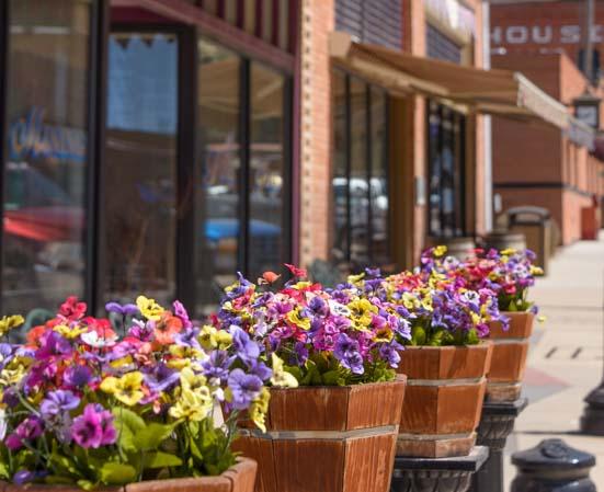 Flowers in Philipsburg Montana