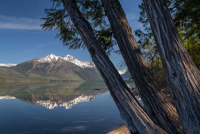 Trees at Lake McDonald Glacier National Park Montana