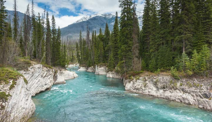 Stream Kootenay National Park British Columbia Canada
