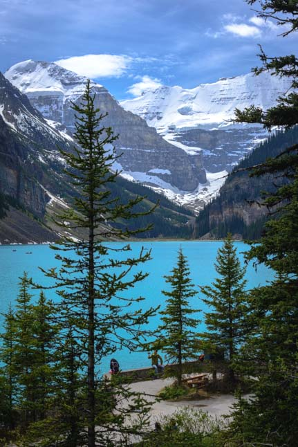 Lake Louise Pine Trees Banff National Park Canada