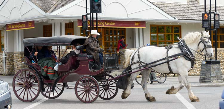 Horse drawn carriage ride in Banff Alberta Canada