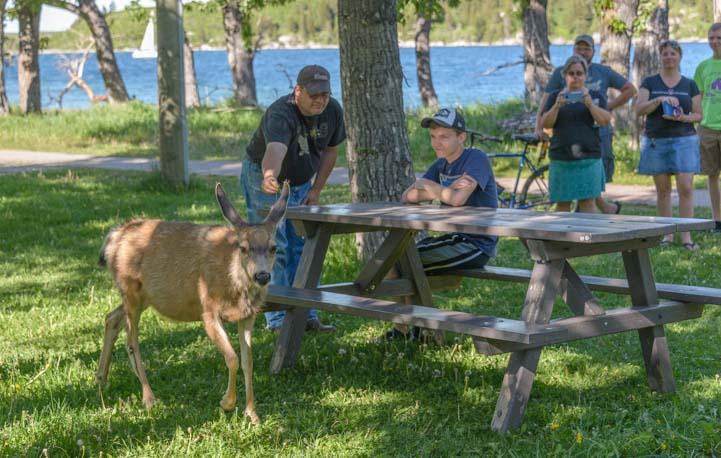 Deer in the park Waterton Lakes National Park Alberta Canada