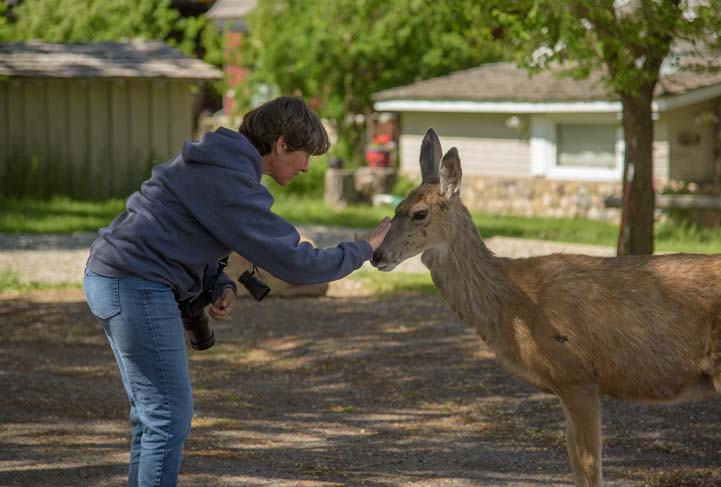 Patting a deer