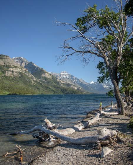Shoreline Waterton Lakes National Park Alberta Canada