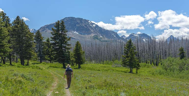 Hiking Beaver Pond Loop Trail Glacier National Park Montana