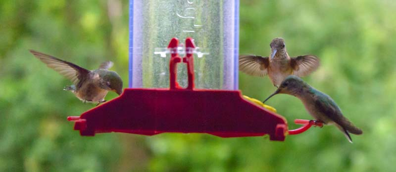 Hummingbirds at feeder on RV window