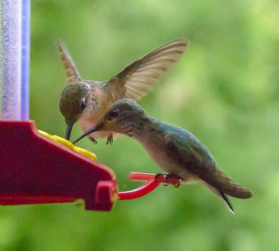 Hummingbirds share a drink at the RV window feeder