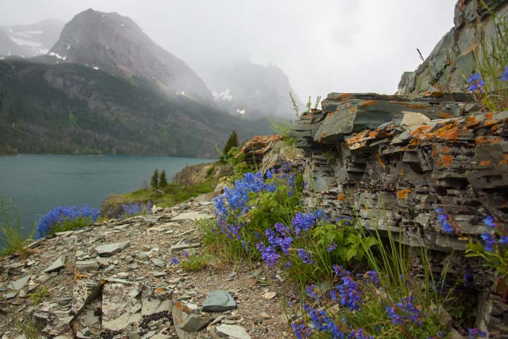 Wildflowers on a cliff Glacier National Park St Mary Lake Montana