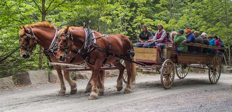 Horse-drawn wagon ride Acadia National Park Carriage Roads Maine