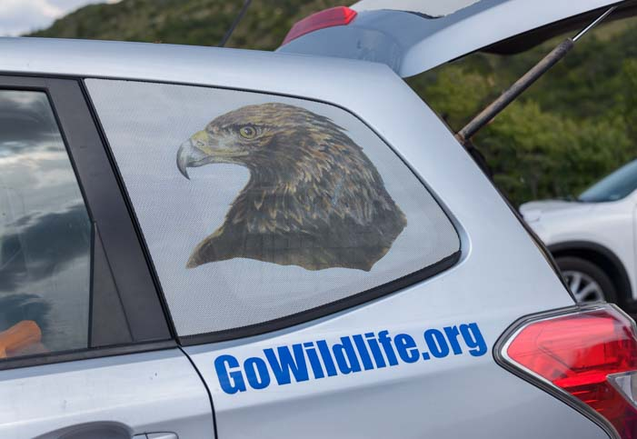 GoWildlife.org Subaru with Golden Eagle Image