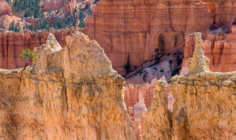 Windows Rim Trail Bryce Canyon National Park Utah