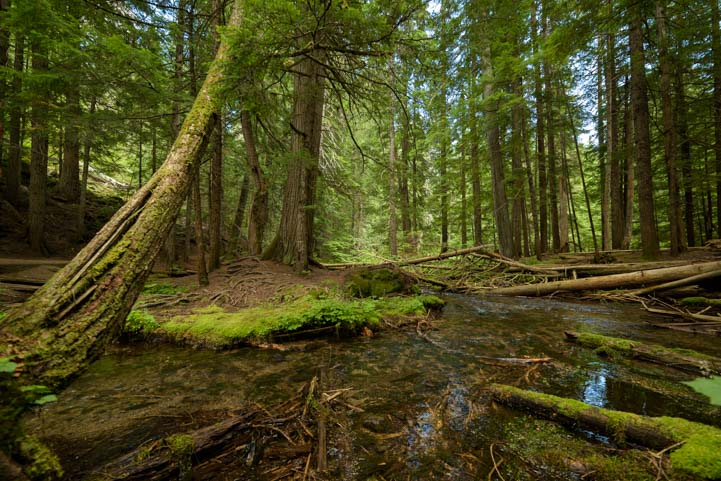 Ross Creek Cedars Scenic Area Kootenai National Forest Montana