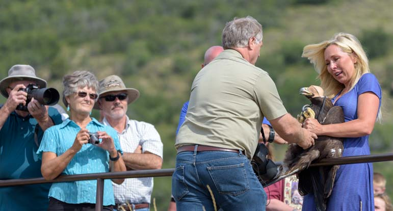 Martin Tyner master falconer Southwest Wildlife Foundation releases rehabilitated eagle from mountain in Cedar City Utah