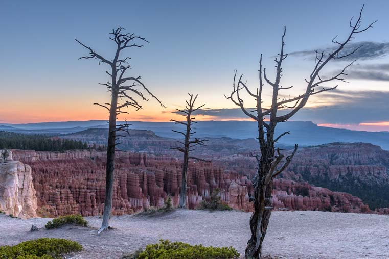 Trees at Bryce Canyon National Park Inspiration Point Utah