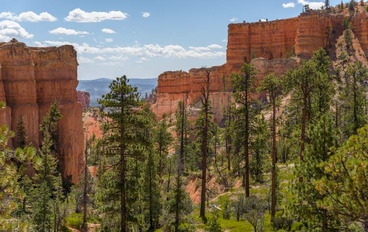 Trees and walls Fairyland Trail Bryce Canyon National Park Utah