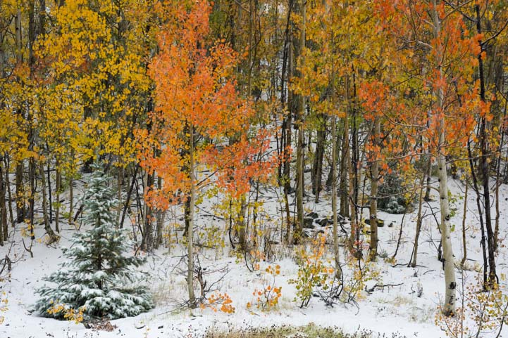 Snow and fall colors San Juan Skyway Rocky Mountains Colorado