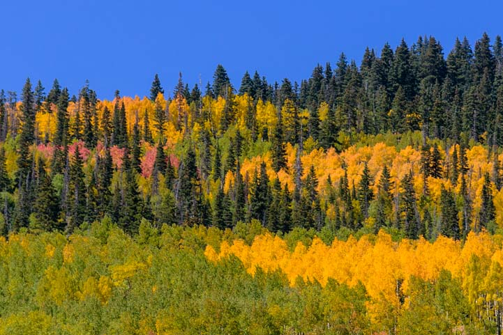 Fall color in Colorado Rocky Mountains