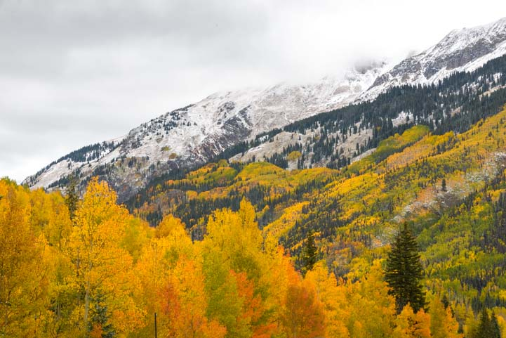 Yellow aspen fall leaves San Juan Skyway Colorado Rocky Mountains
