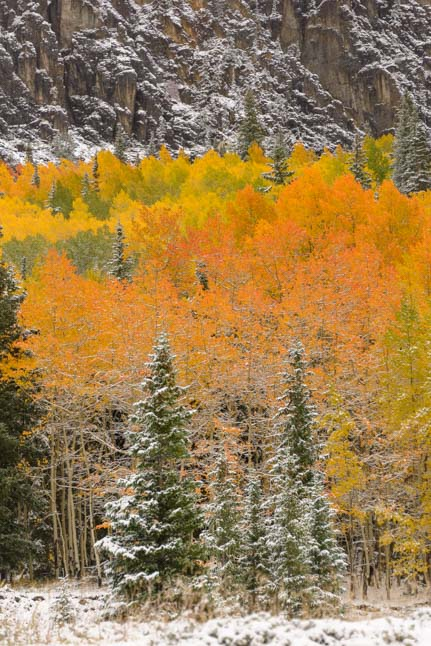Orange aspen San Juan Skyway Colorado Rocky Mountains
