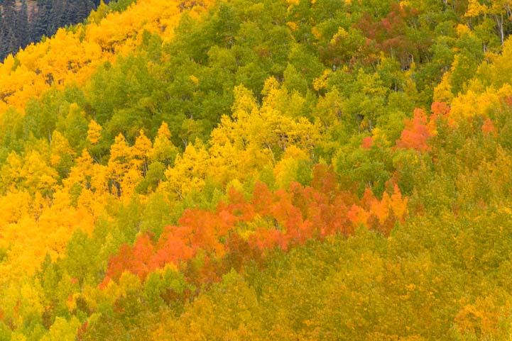 Color patterns San Juan Skyway Colorado Rocky Mountains Autumn Leaves