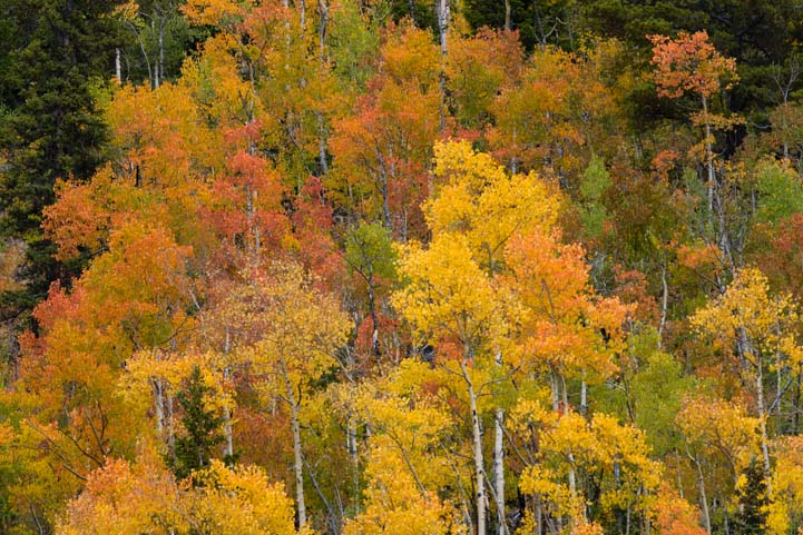 Fall color San Juan Skyway Colorado Rocky Mountains