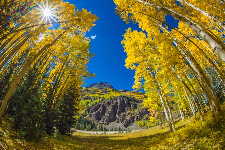 Starburst golden aspen autumn leaves San Juan Skyway Colorado Rocky Mountains