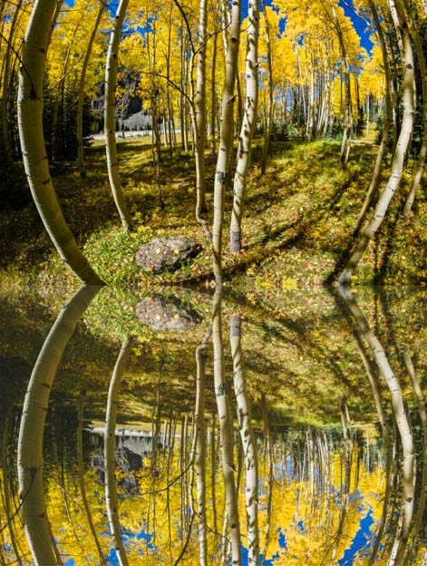 Reflections golden aspen autumn leaves San Juan Skyway Rocky Mountains