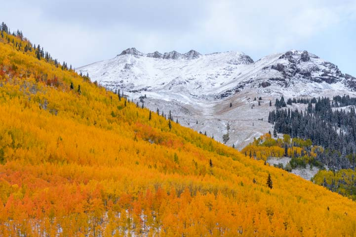 Aspen hillside fall color San Juan Skyway Colorado Rocky Mountains