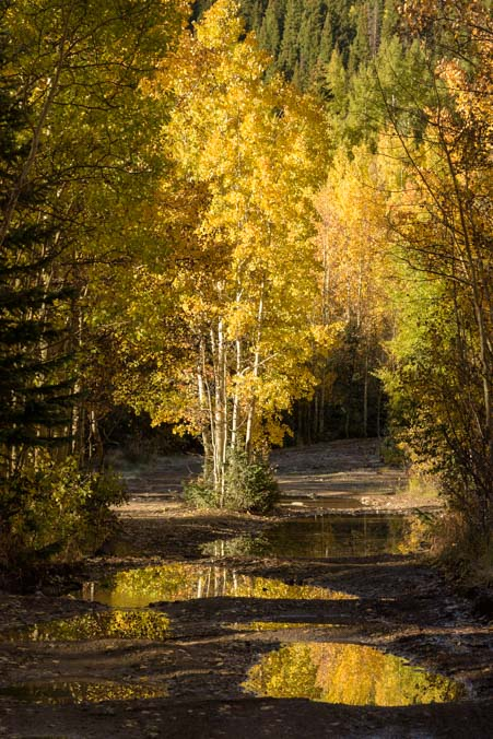Reflections of autumn leaves and aspen trees San Juan Skyway Rocky Mountains Colorado