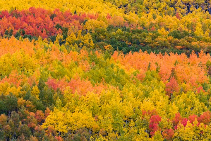 Autumn color San Juan Skyway Rocky Mountains