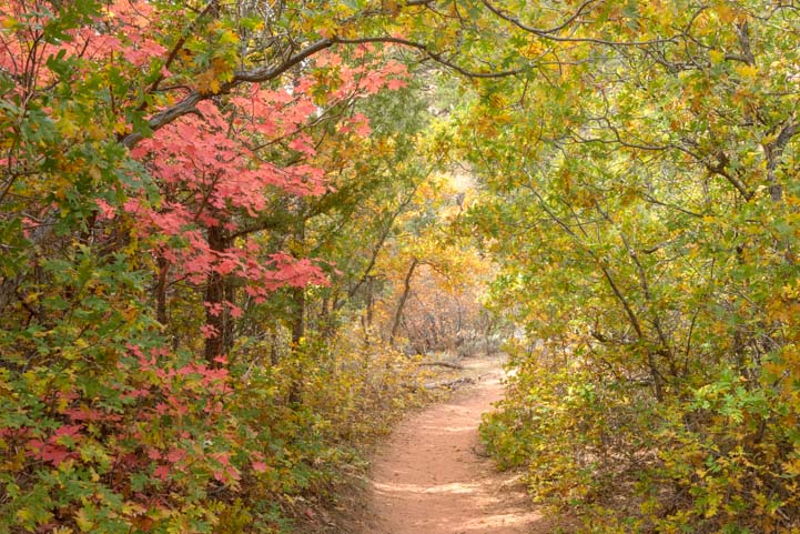 Fall Color Taylor Creek Hike Zion National Park Kolob Canyons