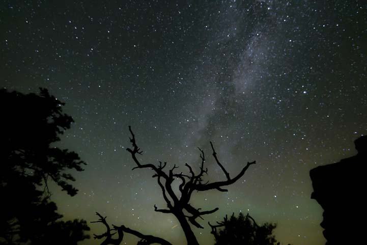Tree and Milky Way North Rim Grand Canyon Arizona