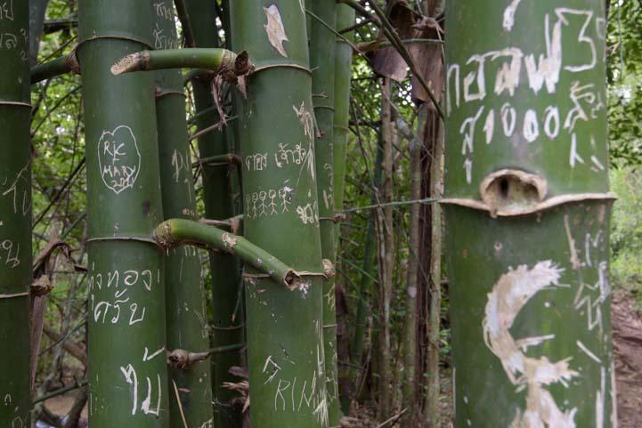 Bamboo Graffiti Sri Nakarin Dam National Park Kanchanaburi Thailand