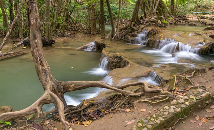 Tree roots Huay Mae Khamin Waterfall Khuean Srinagarindra National Park Kanchanaburi Thailand