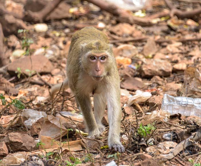 A Long tailed monkey Kanchanaburi Thailand