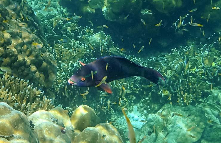 Reef Fish Dive & Relax Snorkeling Tour Ko Rok in Ko Lanta Thailand