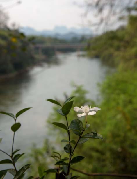 River at Rim Nam Cafe Kanchanaburi Thailand