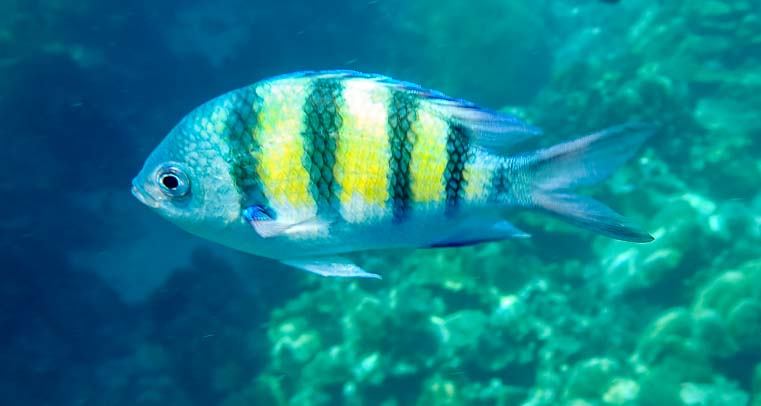 Reef fish Dive and Relax Snorkeling Tour of Ko Rok in Ko Lanta Thailand