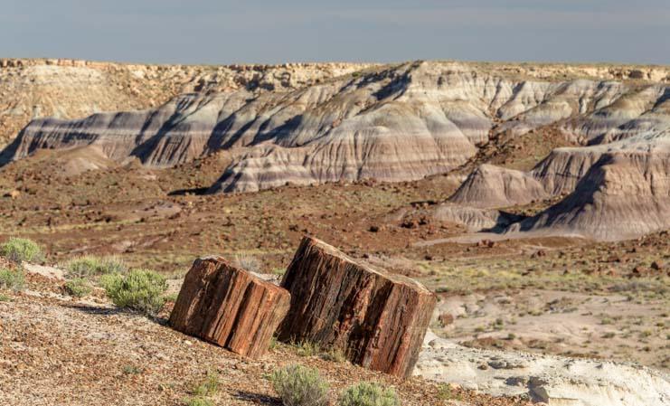 Stumps Petrified Forest National Park Arizona Jasper Forest