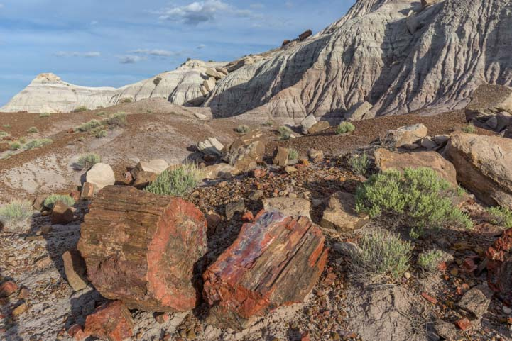 Jasper Forest petrified logs Petrified Forest National Park Arizona