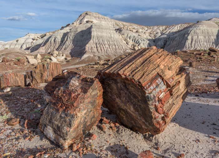 Logs Petrified Forest National Park Arizona Jasper Forest