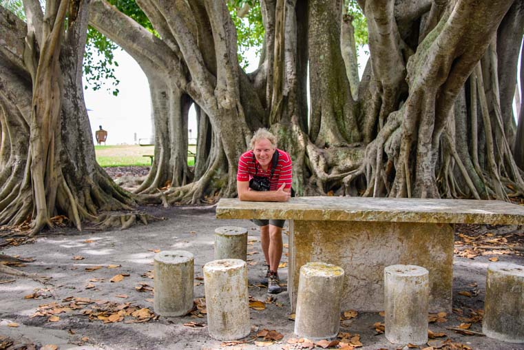 Banyan tree The Ringling gardens Sarasota Florida