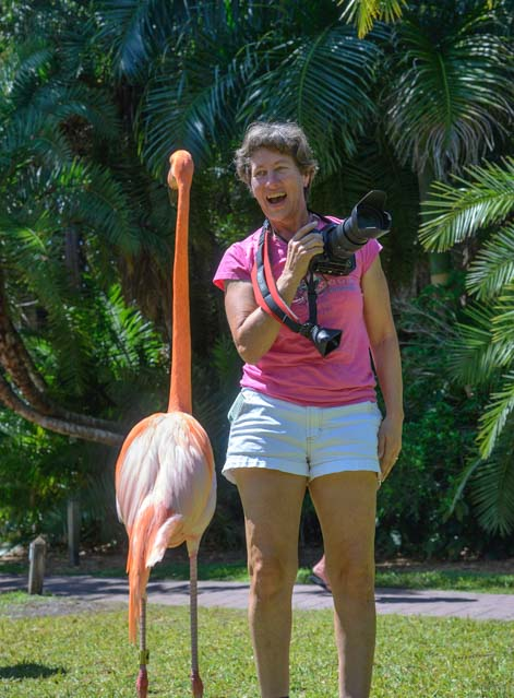Flamingo and photographer Jungle Gardens Sarasota Florida