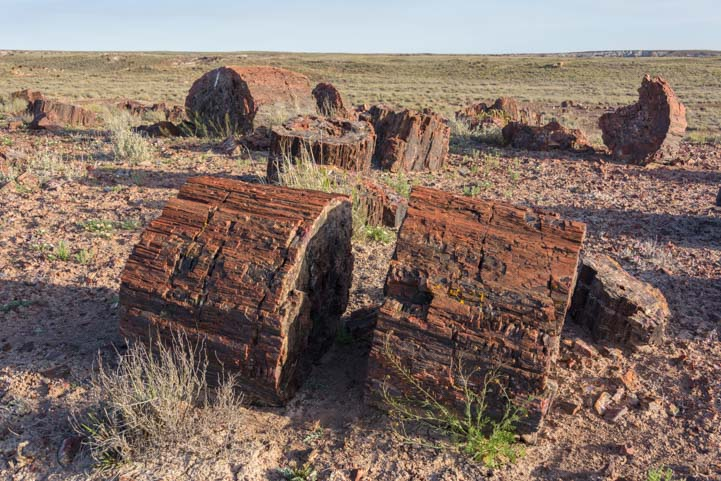 Logs Petrified Forest National Park Crystal Forest