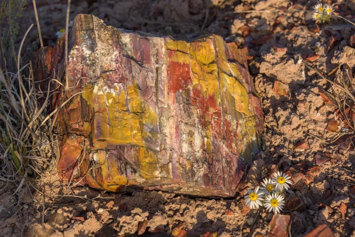 Colorful agate Petrified Forest National Park Jasper Forest-2