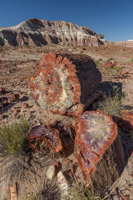 Petrified logs Petrified Forest National Park Arizona Jasper Forest