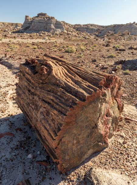 Log with a knot Petrified Forest National Park Arizona Jasper Forest